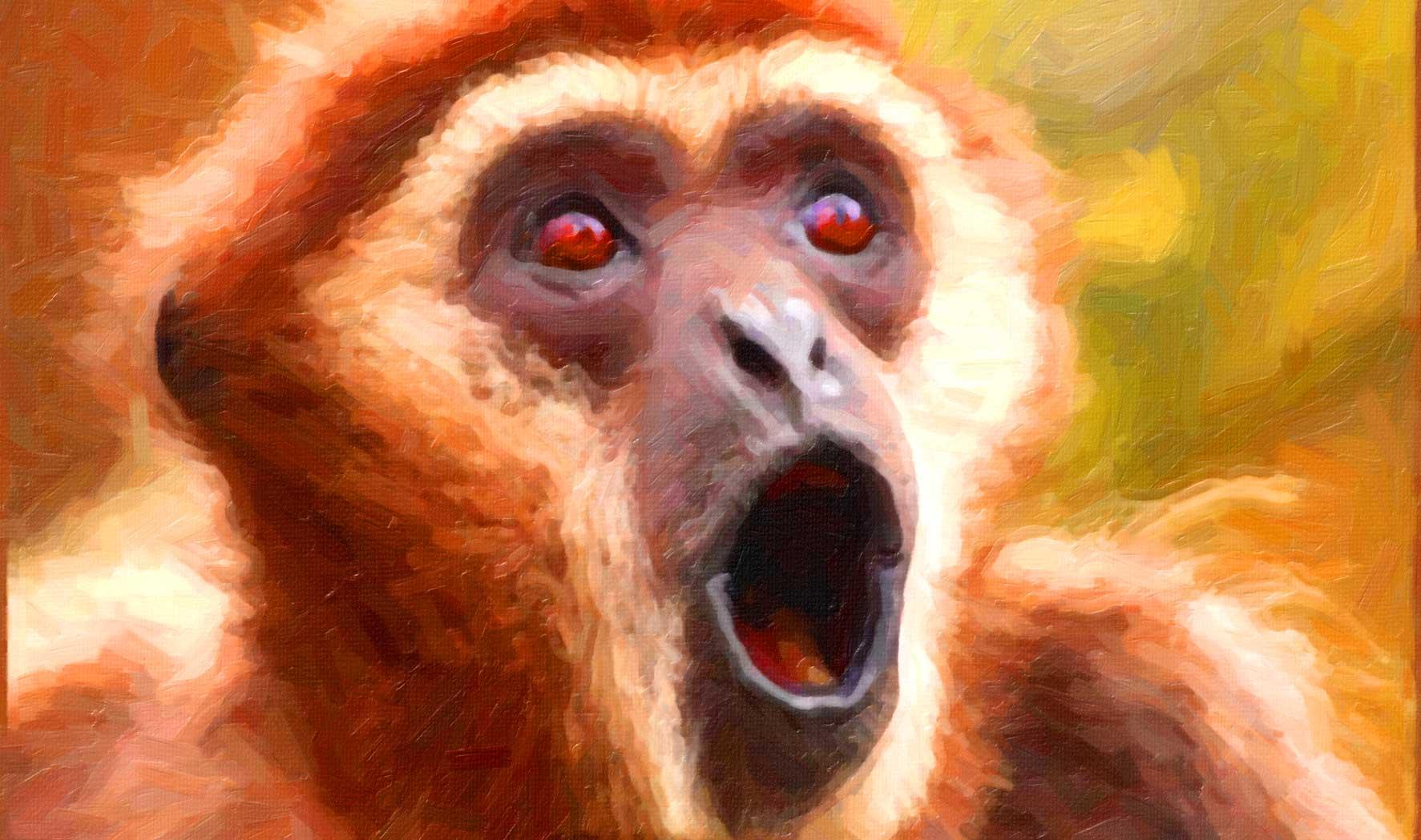 The beer brewing monkeys of borneo modern drunkard magazine voltagebd Images